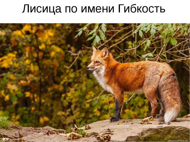 Лисица по имени Гибкость