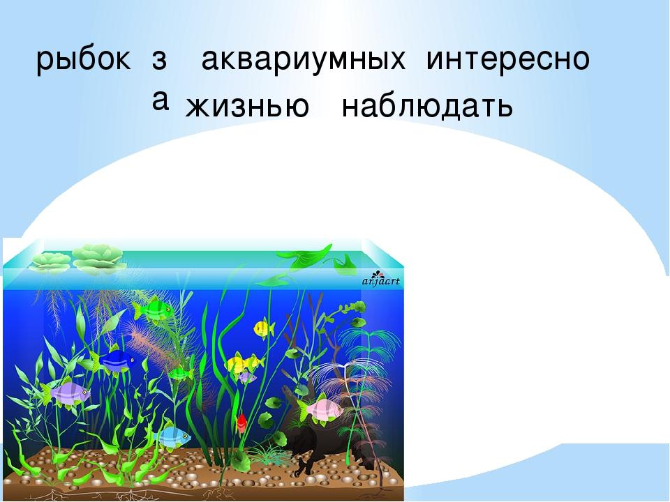 рыбок за аквариумных интересно жизнью наблюдать