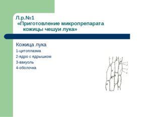 Л.р.№1 «Приготовление микропрепарата кожицы чешуи лука» Кожица лука 1-цитопла