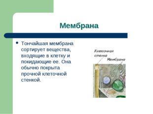 Мембрана Тончайшая мембрана сортирует вещества, входящие в клетку и покидающи