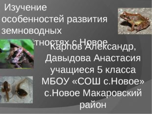 Изучение особенностей развития земноводных в окрестностях с.Новое Карпов Але