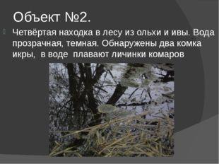 Объект №2. Четвёртая находка в лесу из ольхи и ивы. Вода прозрачная, темная.