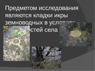 Предметом исследования являются кладки икры земноводных в условиях окрестност