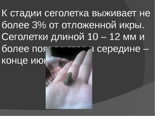 К стадии сеголетка выживает не более 3% от отложенной икры. Сеголетки длиной...
