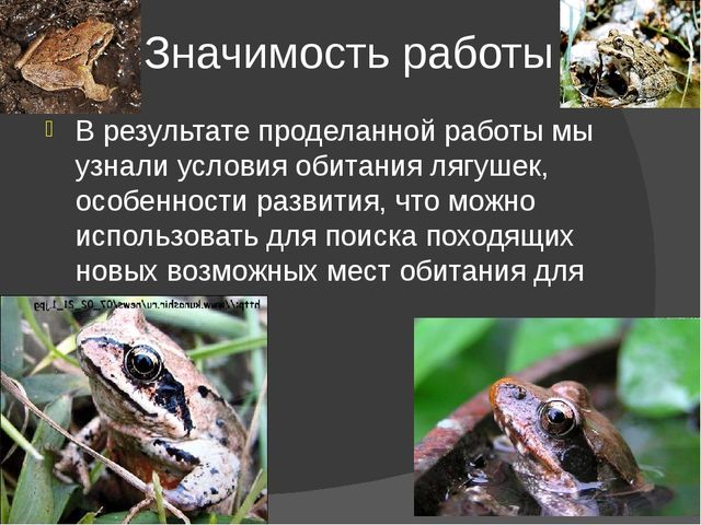 Значимость работы В результате проделанной работы мы узнали условия обитания...