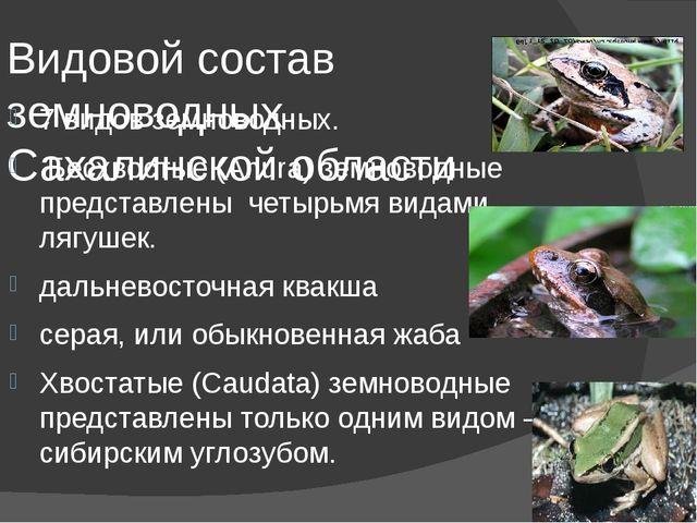 Видовой состав земноводных Сахалинской области 7 видов земноводных. Бесхвосты...
