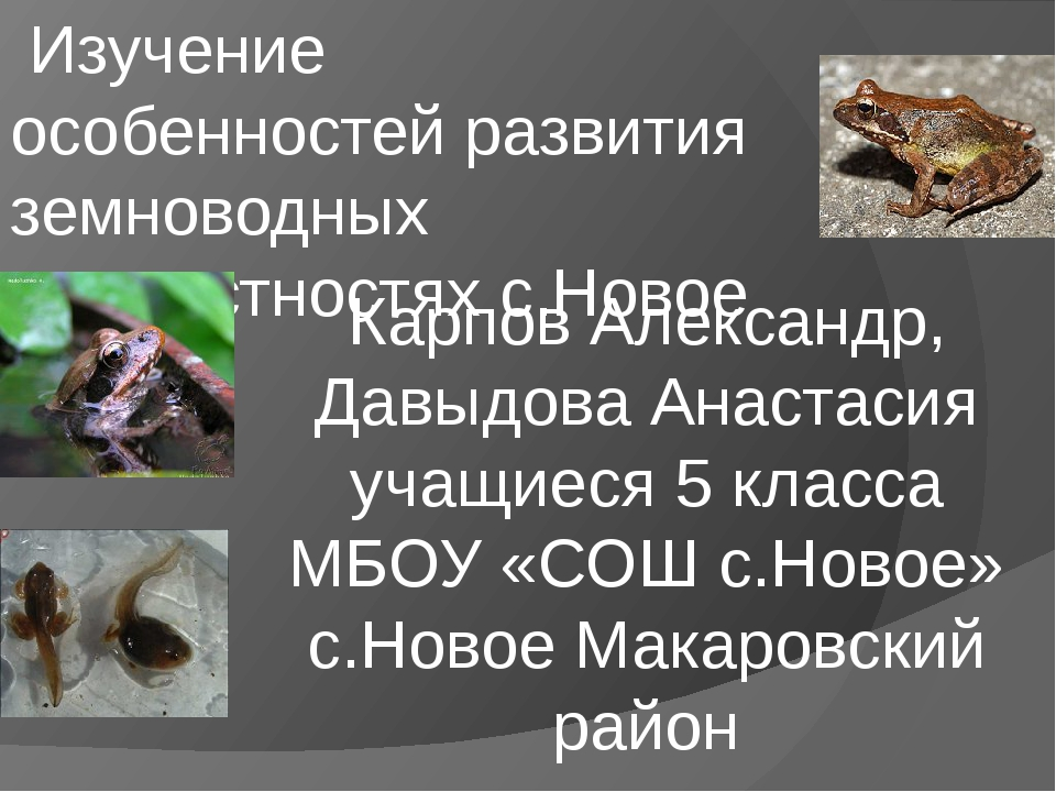Изучение особенностей развития земноводных в окрестностях с.Новое Карпов Але...