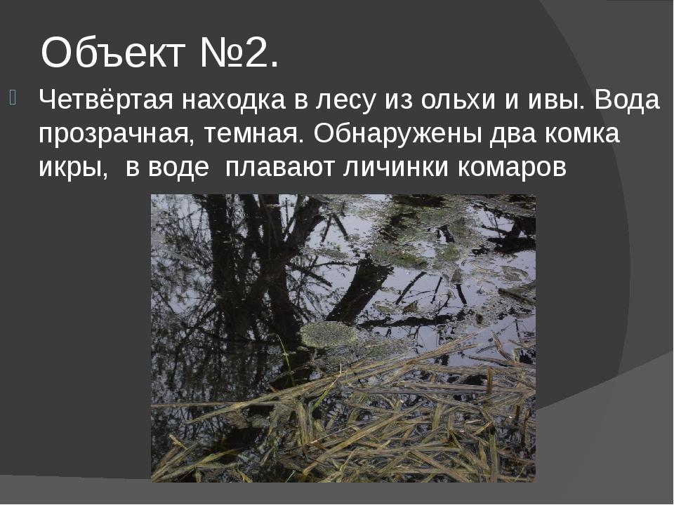 Объект №2. Четвёртая находка в лесу из ольхи и ивы. Вода прозрачная, темная....
