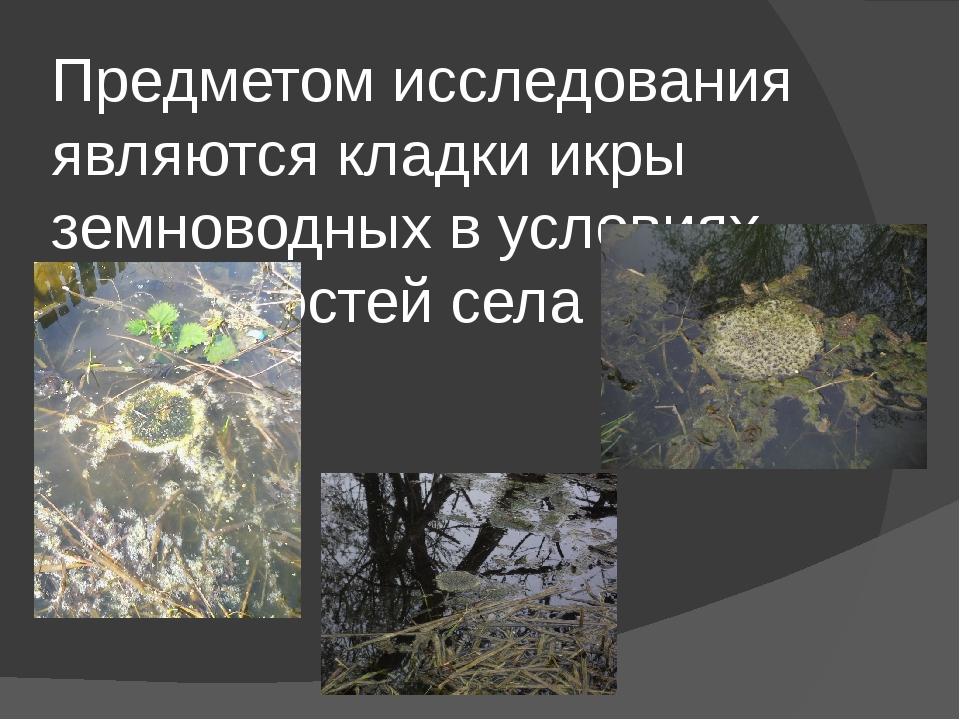 Предметом исследования являются кладки икры земноводных в условиях окрестност...