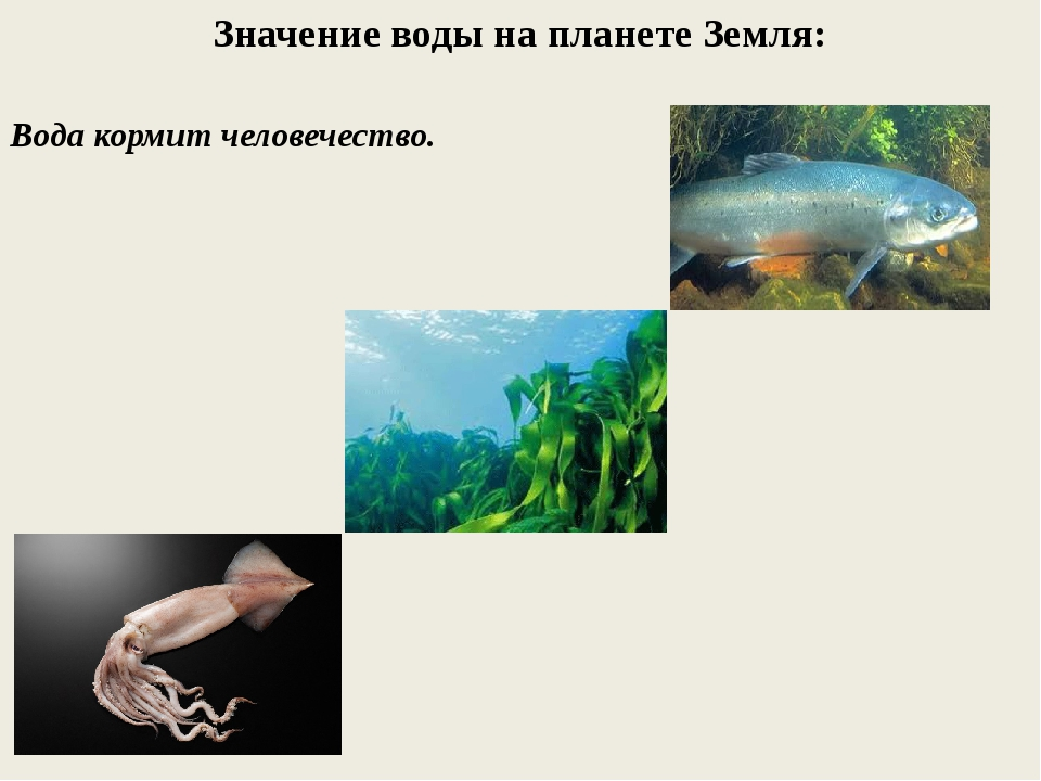Значение воды на планете Земля: Вода кормит человечество.