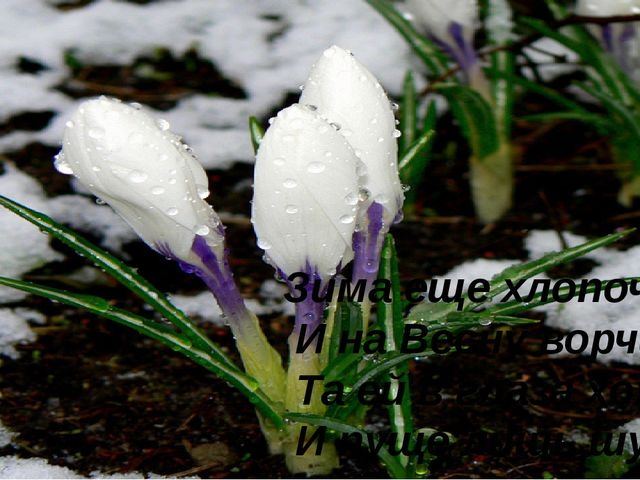 Зима еще хлопочет И на Весну ворчит: Та ей в глаза хохочет И пуще лишь шум...