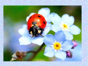 С неба в гости прилетела. На цветочек мамин села. Крылышки в горошек. Шесть п