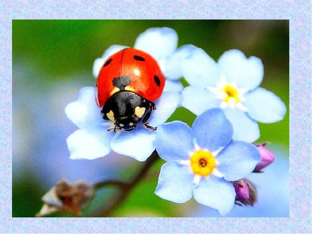 С неба в гости прилетела. На цветочек мамин села. Крылышки в горошек. Шесть п...