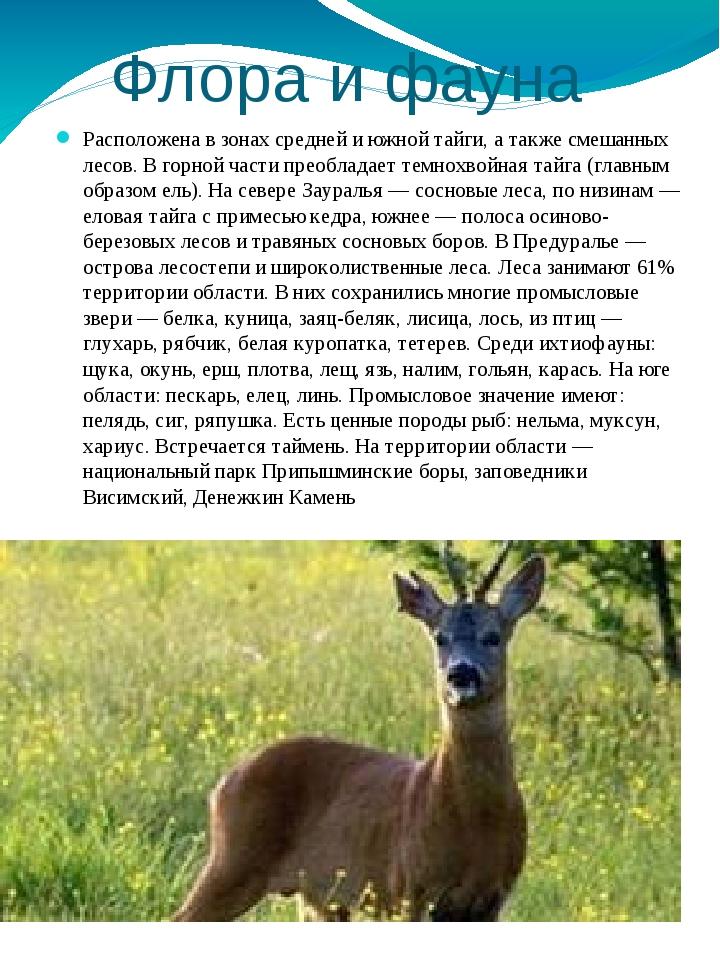 Флора и фауна Расположена в зонах средней и южной тайги, а также смешанных ле...