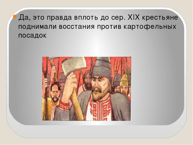 Да, это правда вплоть до сер. XIX крестьяне поднимали восстания против картоф...