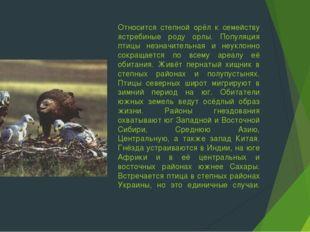 Относится степной орёл к семейству ястребиные роду орлы. Популяция птицы незн