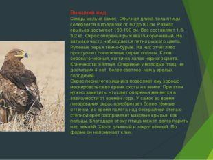 Внешний вид Самцы мельче самок. Обычная длина тела птицы колеблется в предела