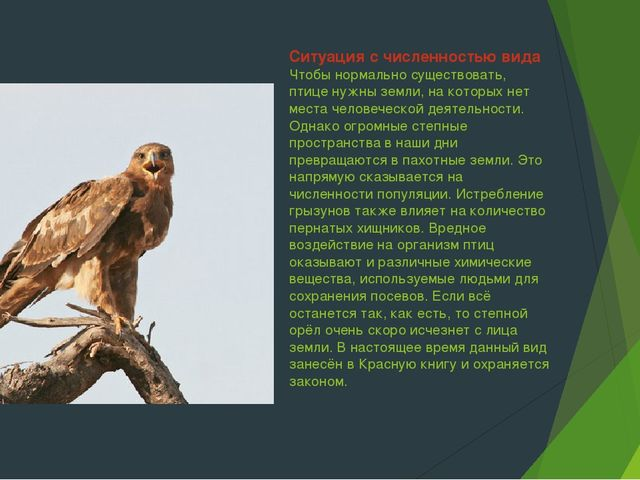 Ситуация с численностью вида Чтобы нормально существовать, птице нужны земли,...