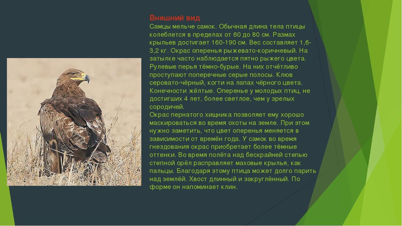 Внешний вид Самцы мельче самок. Обычная длина тела птицы колеблется в предела...