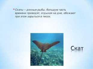 Скаты – донные рыбы, большую часть времени проводят, отдыхая на дне, обожают