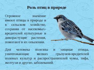Огромное значение имеют птицы в природе и в сельском хозяйстве, сохраняя от н