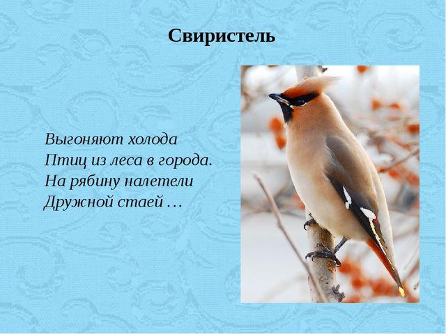 Выгоняют холода Птиц из леса в города. На рябину налетели Дружной стаей …...