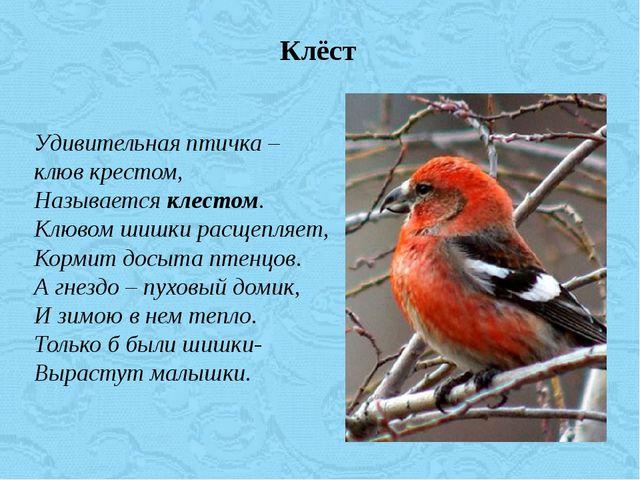 Удивительная птичка – клюв крестом, Называется клестом. Клювом шишки расщепля...