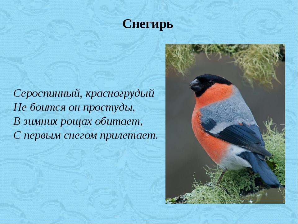 Сероспинный, красногрудый Не боится он простуды, В зимних рощах обитает, С пе...