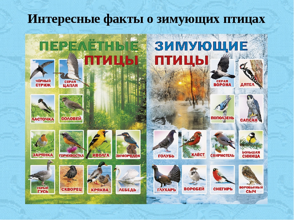 Интересные факты о зимующих птицах