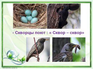 - Скворцы поют : « Сквор – сквор»