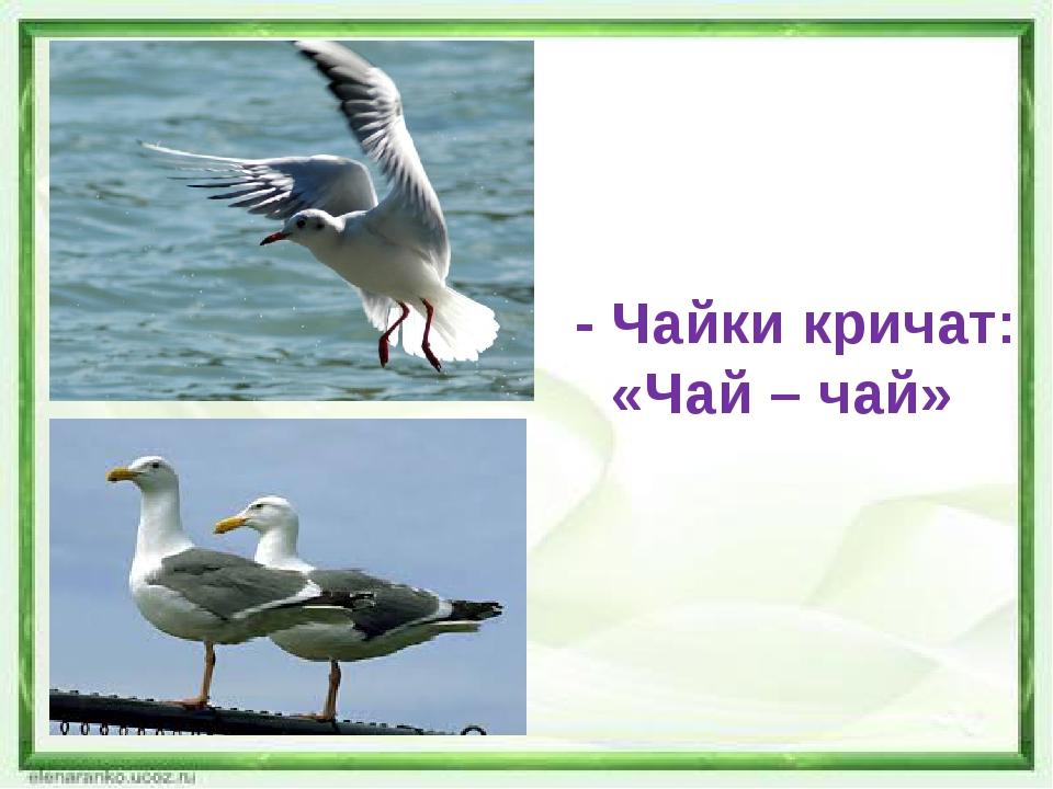 - Чайки кричат: «Чай – чай»