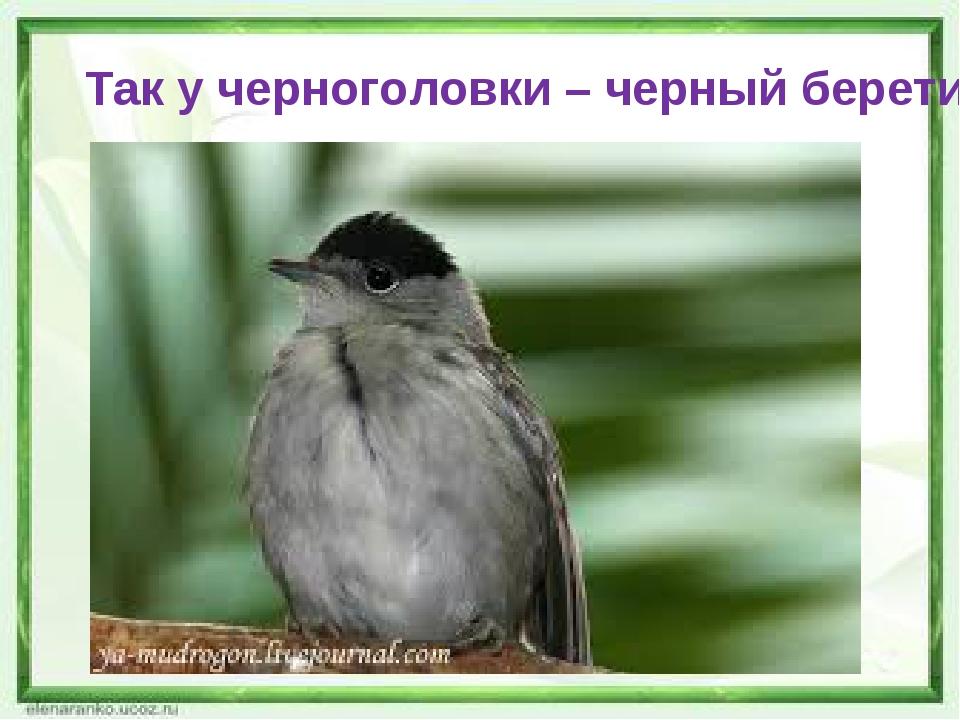 Так у черноголовки – черный беретик