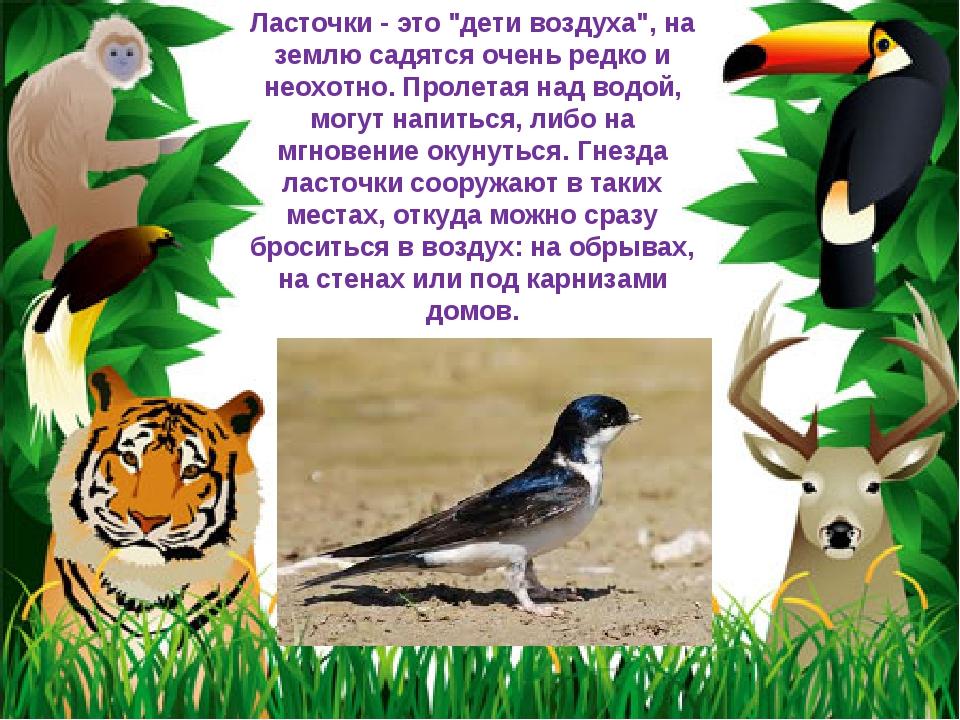 """Ласточки - это """"дети воздуха"""", на землю садятся очень редко и неохотно. Проле..."""