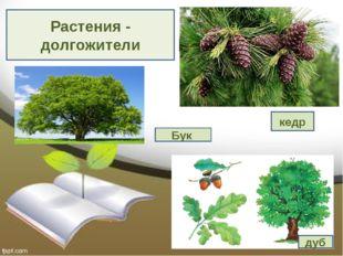 Растения - долгожители Выполнили: Крылова Марина, Золотенкова Богдана, Синютк