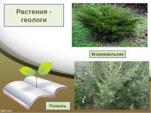 Растения - геологи Выполнили: Крылова Марина, Золотенкова Богдана, Синюткина