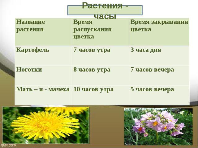 Растения - часы Название растенияВремя распускания цветкаВремя закрывания ц...