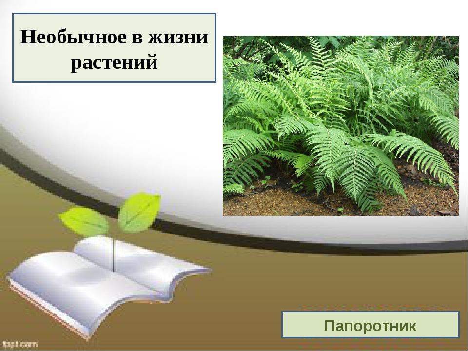 Необычное в жизни растений Папоротник