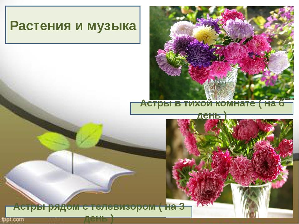 Растения и музыка Астры в тихой комнате ( на 6 день ) Астры рядом с телевизор...
