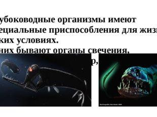 Глубоководные организмы имеют специальные приспособления для жизни в таких ус