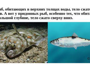 У рыб, обитающих в верхних толщах воды, тело сжато с боков. А вот у придонных