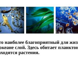 Это наиболее благоприятный для жизни в океане слой. Здесь обитает планктон и