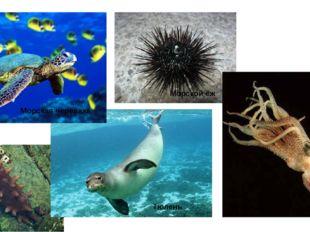 Морская черепаха Тюлень Морской ёж Кальмар Трепанг