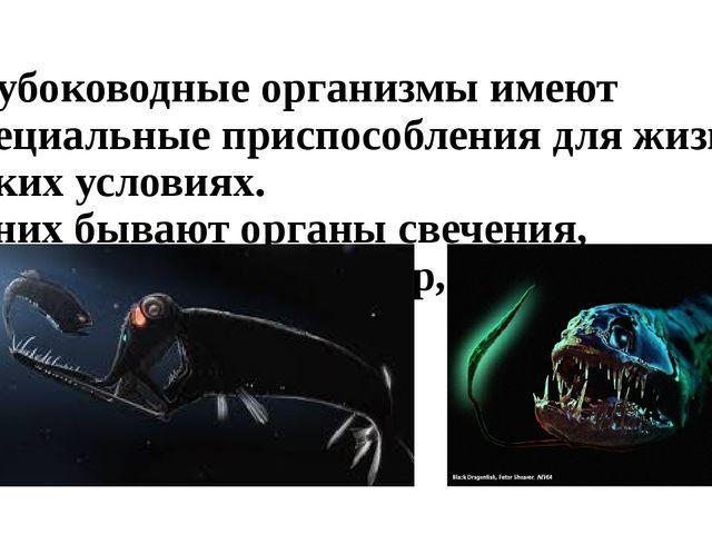 Глубоководные организмы имеют специальные приспособления для жизни в таких ус...