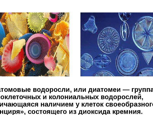 Диатомовые водоросли, или диатомеи — группа одноклеточных и колониальных водо...