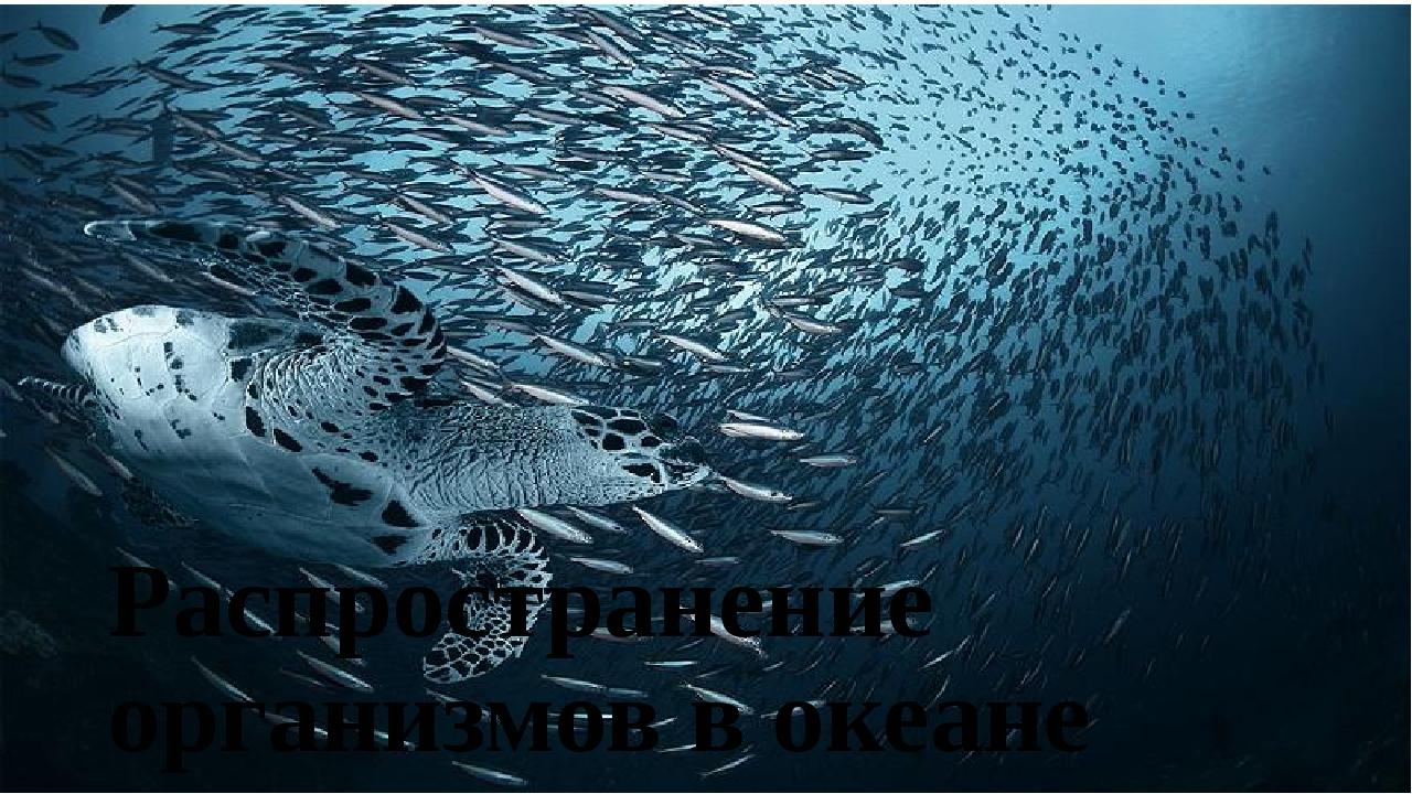 Распространение организмов в океане