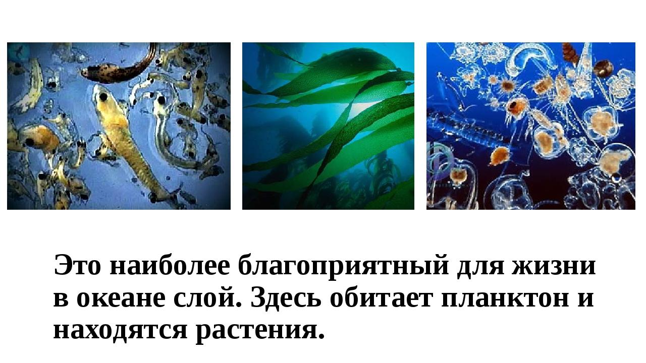 Это наиболее благоприятный для жизни в океане слой. Здесь обитает планктон и...