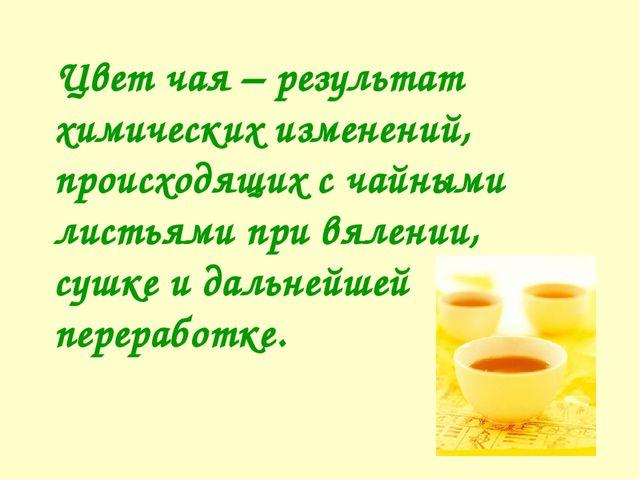 Цвет чая – результат химических изменений, происходящих с чайными листьями п...