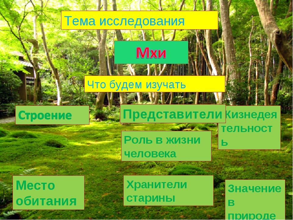 Тема исследования Что будем изучать Место обитания Жизнедеятельность Представ...