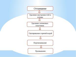 Оттаивание Удаление внутренностей и головы Удаление хитиновых пластинок Ошпар