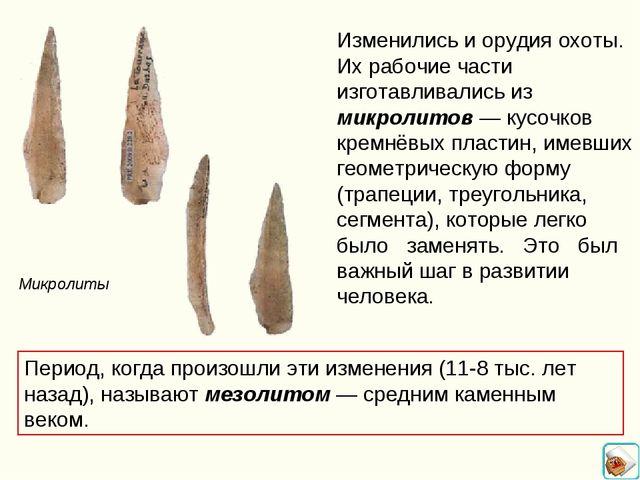 Изменились и орудия охоты. Их рабочие части изготавливались из микролитов — к...
